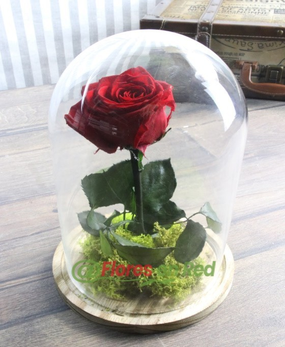 Rosa Eterna Bella y la Bestia Vitoria