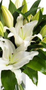 Envío de Flores para Vitoria, ramos de regalo, ramo de cumpleaños, ramo de lilium oriental
