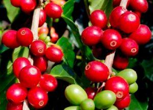 Flores online para Vitoria-Gasteiz, Flores en Red, enviar flores, enviar ramos, ramos de regalo, ramo alegre