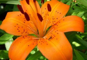 Vitoria Gasteiz, mandar ramos de flores, regalar flores cumpleaños, mandar flores nacimiento