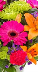 Floristerías Vitoria Gasteiz, enviar flores día madre, enviar ramo flores San Valentín, comprar flores en Vitoria Gasteiz, mandar ramos de flores, regalar flores cumpleaños, mandar flores nacimiento
