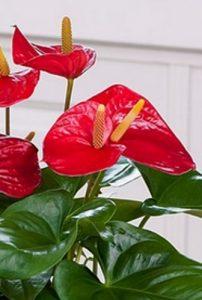 Floristerías Vitoria Gasteiz, enviar plantas día de la madre, mandar plantas de San Valentín, comprar plantas para nacimiento, regalar plantas cumpleaños, mandar plantas aniversario