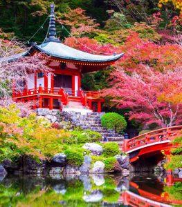 Koyo ó Momiji-gari - Flores en Red