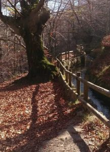 Hayedo de Otzarreta - Parque Nacional del Gorbea