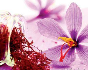 Flor del Azafrán - Flores En Red
