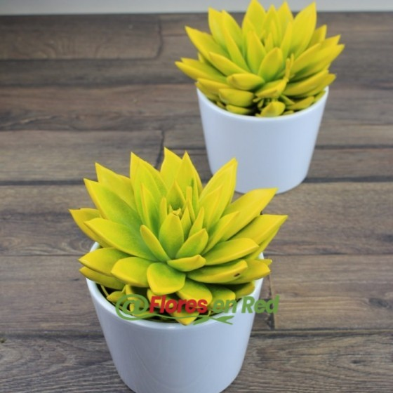 Echeveria Amarillo