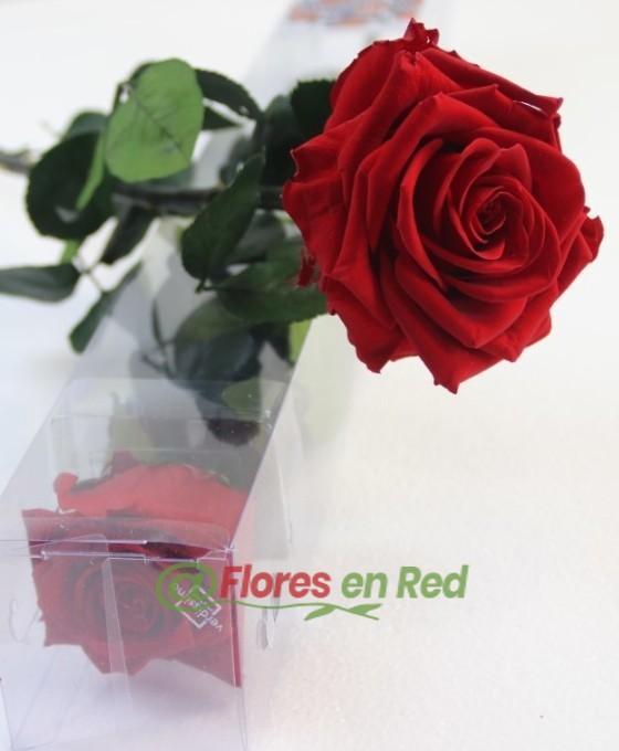 Flor eterna Roja
