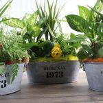 Plantas en Base De Latón