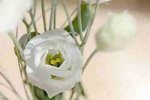 Flores para cumpleaños, Ramosd e flores para cumpleaños, Flores Nacimiento, Flores Aniversario, Flores Enamorados