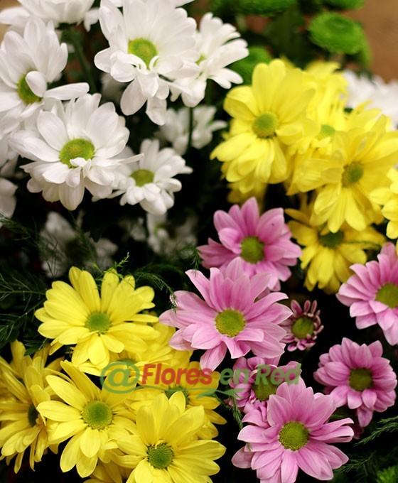Margaritas Flores Vitoria