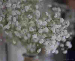 Enviar rosas, floristerías vitoria, floristería online, floristería vitoria, floristería internacional, flores vitoria