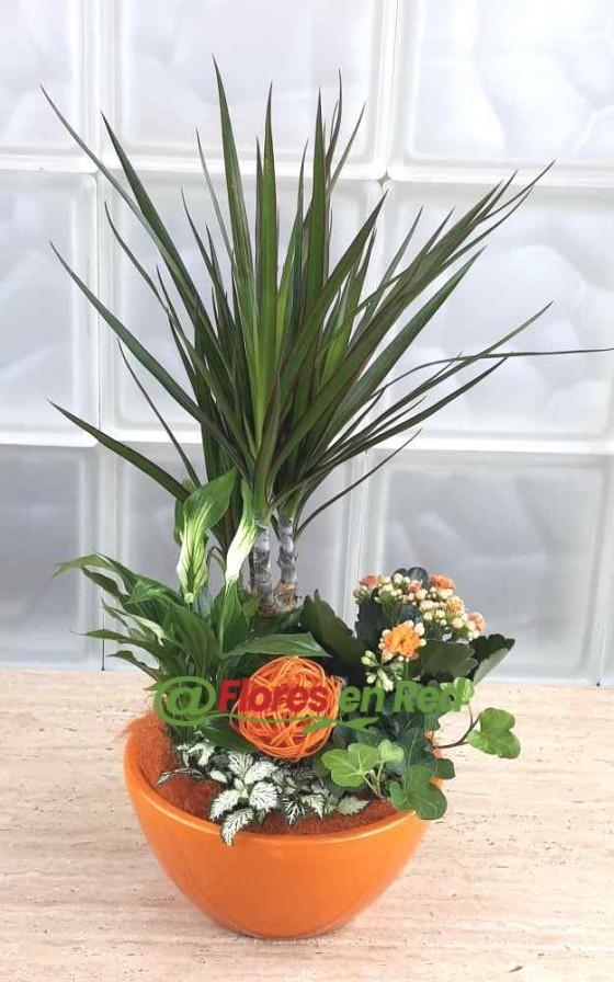 Enviar Plantas con Base Naranja