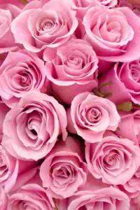 rosas, ramo de rosas, enviar rosas, regalar rosas a domicilio, ramo de rosas precio, mandar rosas,