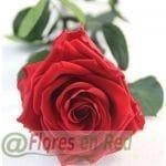 Rosa Preservada Eterna