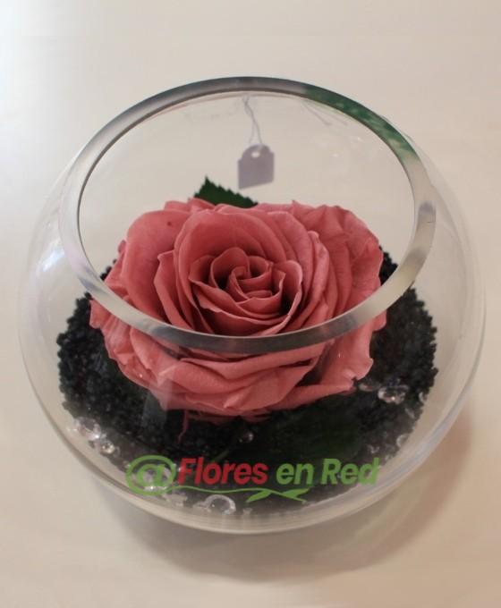 Rosa Eterna Rosa en Pecera
