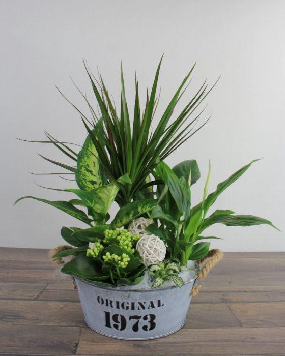 plantas en base de laton para regalar