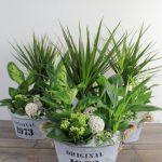 cesta de plantas para regalo