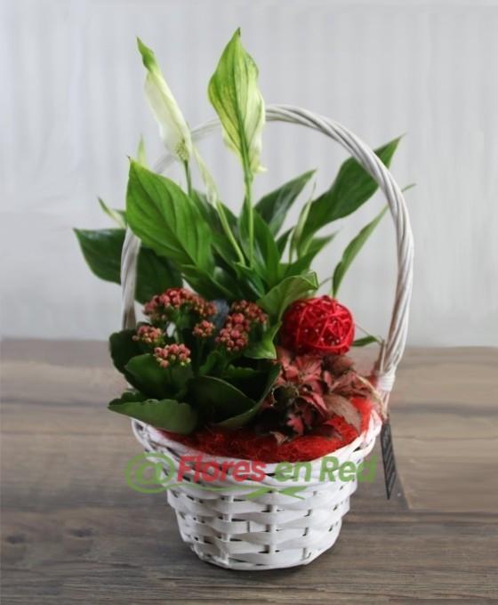 Cesta pequeña de mimbre con plantas