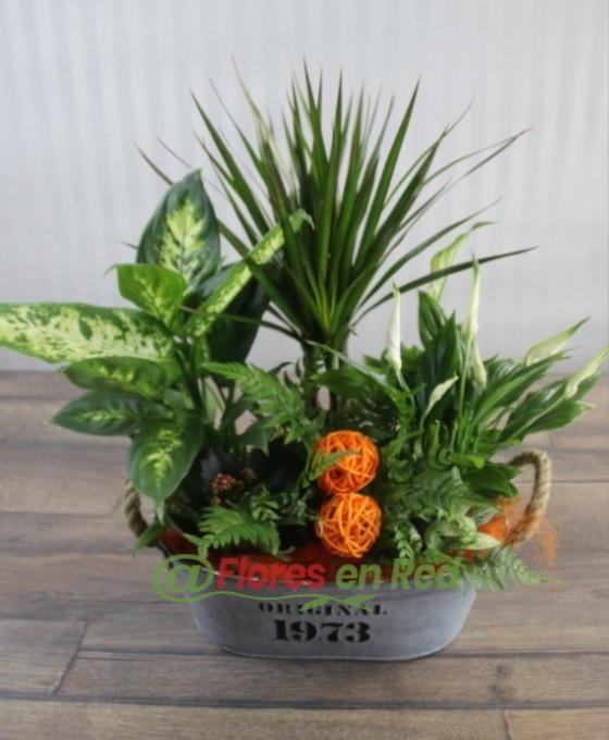 Plantas en base de Latón Naranja en Vitoria