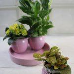 Composición de Plantas en Cerámica Rosa