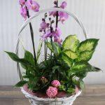 Composición de Plantas orquídeas