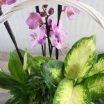 composicion-plantas-orquidea-regalo.jpg