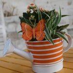 Composición Plantas Regadera Naranja