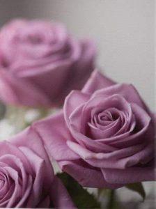 flores para cumpleaños, flores de cumpleaños, rosas para cumpleaños, ramos para cumpleaños, rosas cumpleaños, flores para felicidtar cumpleaños, rosas rosas, rosas de regalo