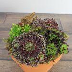 flores planta grasa base barro