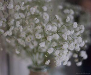 Envio flores urgentes, flores urgentes, ramos de flores para nacimientos, ramos de flores a domicilio, ramos novia