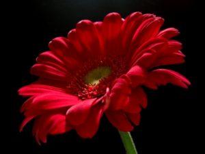 Ramos de flores a domicilio, enviar ramos de flores a domicilio, flores para aniversario, flores San Valentín, flores para enamorados, flores urgentes