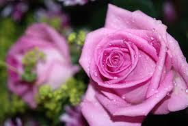 flores para cumpleaños, ramos de flores para cumpleaños, rosas cumpleaños, flores para felicitar, flores para cumpleanos