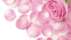 Floristerías Vitoria, floristería online, floristería, floristerías por internet, flores Vitoria