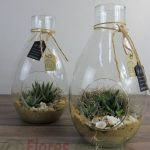 planta grasa en botella