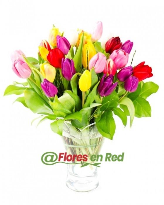 Ramo de 30 Tulipanes