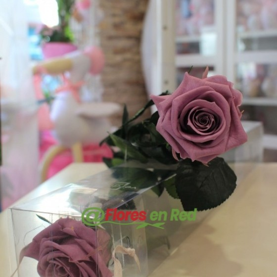 Rosa Preservada Morada