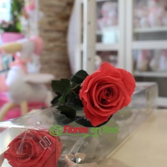 rosa preservada rosa oscuro