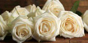 rosas, enviar ramo de rosas, ramo de rosas blancas, ramo de rosas día de la mujer, rosas de cumpleaños