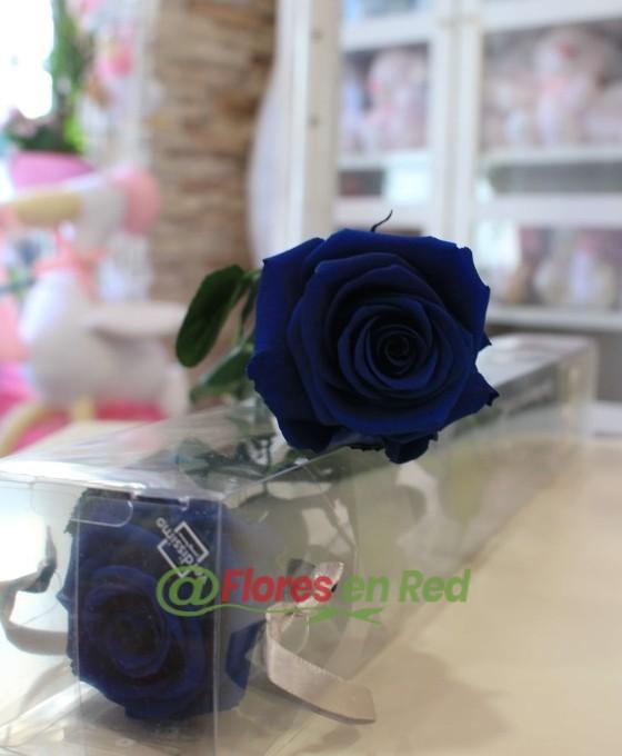 rosas preservadas azules
