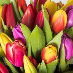 Tulipanes Envío Vitoria