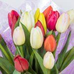 Tulipanes Floristería Vitoria