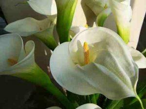 Flores para el Cementerio de Santa Isabel de Vitoria, Flores Día de todos los Santos Vitoria, Corona Flores, Cinta de Condolencia, Coronas difuntos, cruz funeraria, corazón funerario vitoria