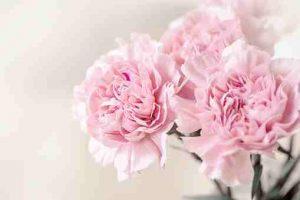 Floristerías baratas en Vitoria, Floristerías en Vitoria, Flores para difuntos, Flores para día de todos los Santos, Floristerías online, Flores floristería