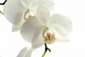flores, enviar ramo de flores, centros de flores, flores nacimiento,enviar flores, envio de flores, enviar ramo flores, floristerias cerca de mi, regalo de flores, flores de aniversario