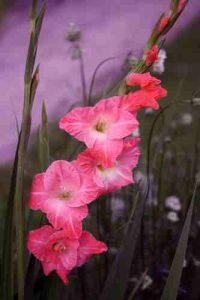 Día de Todos los Santos Vitoria, Cementerio el Salvador, Cementerio santa isabel, flores para difuntos, Floristería Vitoria