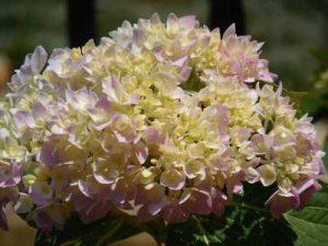 Enviar flores a domicilio, Flores nacimiento, florespara enamorados, flores para nacimiento, Regalar flores a domicilio, ramod e flores para una amiga, Flores urgentes, Enviar flores online