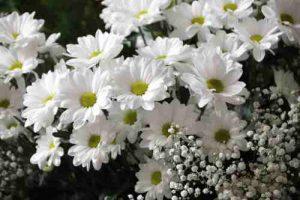 margaritas para día de todos los santos, enviar flores para difuntos, Coronas Flores, coronas de flores para funeral, flores para cementerio de Vitoria