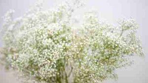Flores de difunto para vitoria cementerio, cementerio santa isabel, floristeria vitoria, cementerio el salvador, cenros de flores fúnebres, corona flores, tanatorio albia gamarra, tanatorio virgen blanca, tanatorio lauzurica