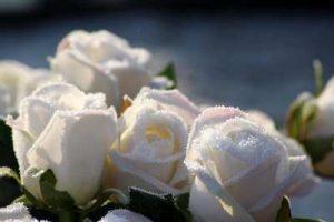 flores para cumpleaños, ramos de flores para cumpleaños, flores de cumpleaños, rosas para cumpleaños, ramos de cumpleaños para una amiga