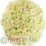 101 Rosas Blancas Vitoria